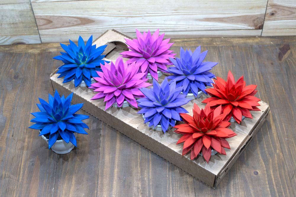 Ecoflora Echeverias coloridas @ divulgação